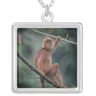 Javan black leaf monkey (Trachypithecus auratus) Silver Plated Necklace