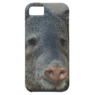 Javelina or Peccary iPhone 5 Cover
