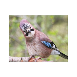 Jay bird wildlife photograph canvas print
