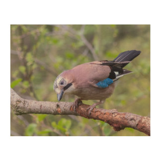 Jay bird wildlife wood canvas
