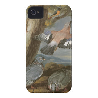 Jay, Green Woodpecker, Pigeons and Redstart, c.165 iPhone 4 Case-Mate Case