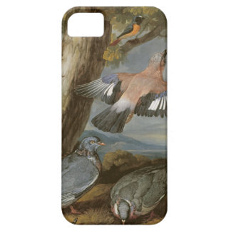 Jay, Green Woodpecker, Pigeons and Redstart, c.165 iPhone 5 Cases