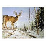 Jay's Peak, White Tail Deer Postcards