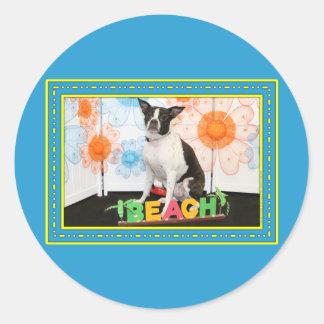 Jazy - Boston & Rat Terrier Mix -4 Round Sticker