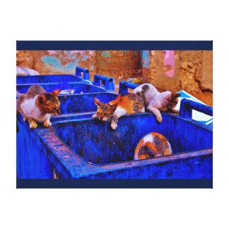 Jeddah Cats Canvas Print
