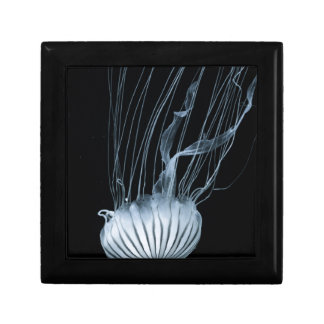 Jeelyfish Gift Box