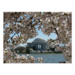 Jefferson Memorial and Cherry Blossoms Poster