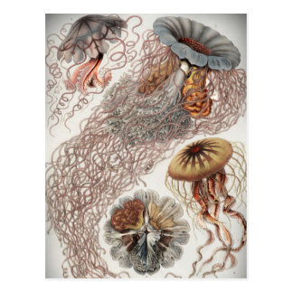 Jellies (jellyfish) in pastel colors postcards