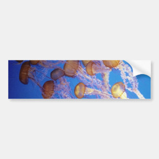Jelly fish Bumper Sticker