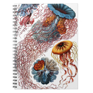 Jelly Fish by Ernst Haeckel Notebook