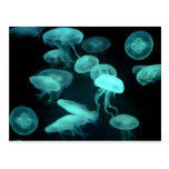 jelly fish glowing postcards