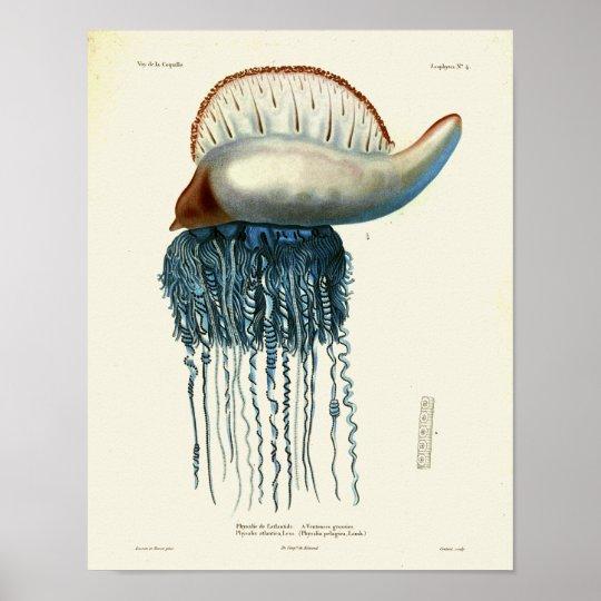 Jellyfish Blue Vintage Sea Creatures Art Print