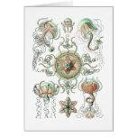 Jellyfish Cards
