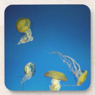 Jellyfish Coaster