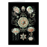 Jellyfish Greeting Cards