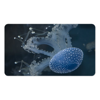 Jellyfish In Blue Pack Of Standard Business Cards