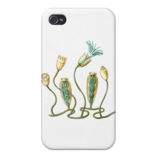 Jellyfish iPhone 4/4S Case