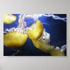 Jellyfish Just Keep Swimming Poster