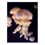Jellyfish Post Card