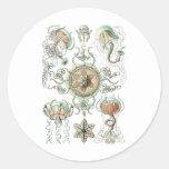 Jellyfish Round Sticker