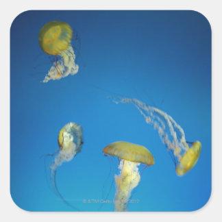 Jellyfish Square Sticker