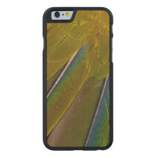 Jenday Conure Feather Design Carved Maple iPhone 6 Case