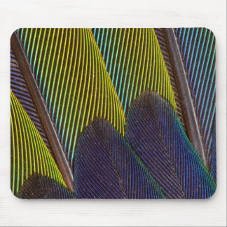 Jenday Conure Feather Detail Mouse Mat