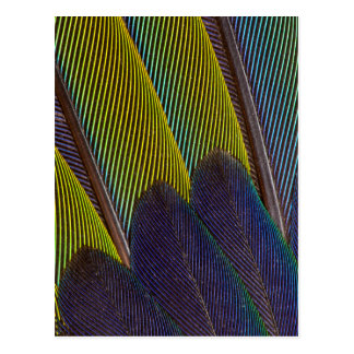 Jenday Conure Feather Detail Postcard