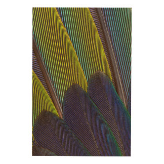 Jenday Conure Feather Detail Wood Print
