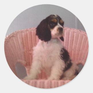 Jenna, Tri american cocker spaniel puppy Stickers