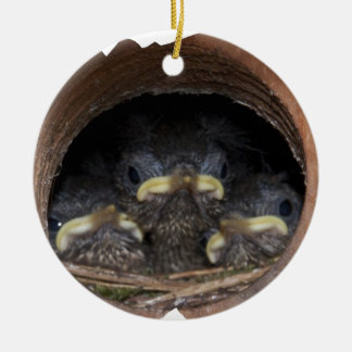 jenny wren chicks christmas ornament