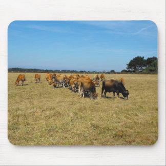 Jersey calves and young bull mouse pad