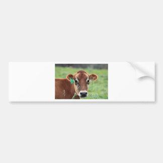 Jersey Cow Bumper Sticker