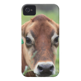 Jersey Cow iPhone 4 Cases