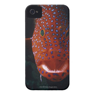 Jewel Grouper, Cephalopholis miniata iPhone 4 Case-Mate Cases