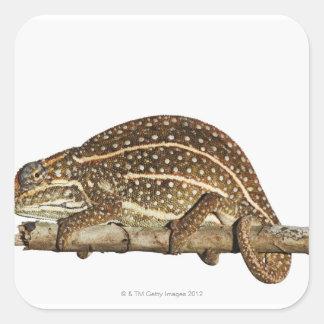 Jewelled chameleon Campan s chameleon Square Sticker