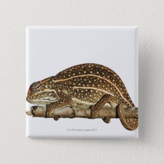 Jewelled chameleon, Campan's chameleon 15 Cm Square Badge