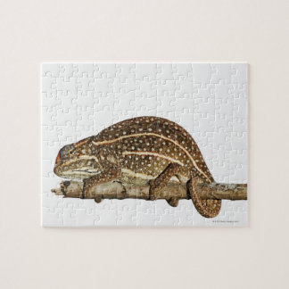 Jewelled chameleon, Campan's chameleon Jigsaw Puzzle
