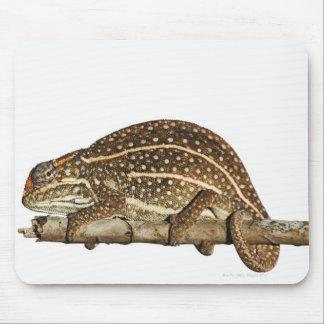 Jewelled chameleon, Campan's chameleon Mouse Mat