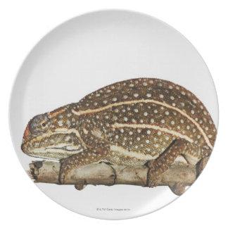 Jewelled chameleon, Campan's chameleon Plate