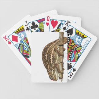 Jewelled chameleon, Campan's chameleon Poker Deck