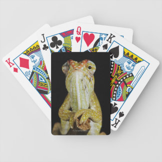 Jewelled chameleon, or Campan's chameleon Bicycle Playing Cards