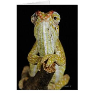 Jewelled chameleon, or Campan's chameleon Card
