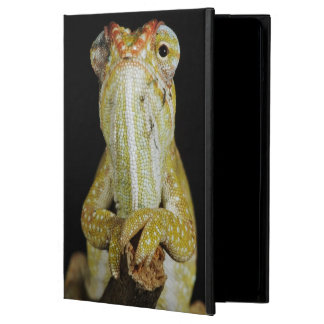 Jewelled chameleon, or Campan's chameleon Case For iPad Air