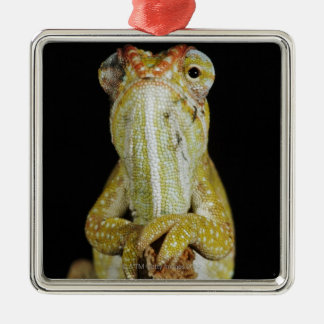 Jewelled chameleon, or Campan's chameleon Christmas Ornament