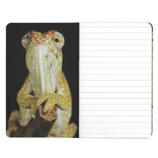 Jewelled chameleon, or Campan's chameleon Journal