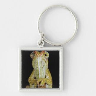 Jewelled chameleon, or Campan's chameleon Key Ring