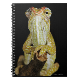 Jewelled chameleon, or Campan's chameleon Notebook