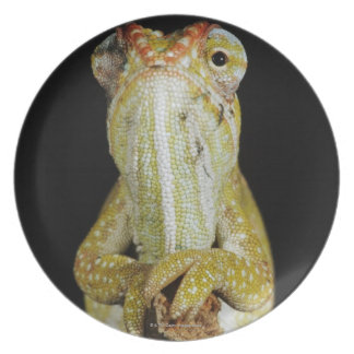 Jewelled chameleon, or Campan's chameleon Plate