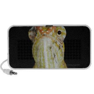 Jewelled chameleon, or Campan's chameleon iPod Speakers